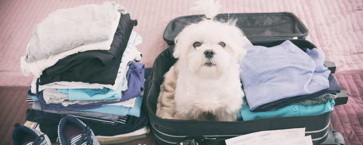 Guide to Travelling with Pets from PetGuide.com