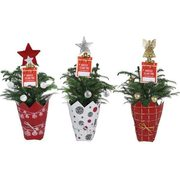 "Holiday Planters - 4"" Decorated Norfolk Pine - $7.49 ($2.50 off)"